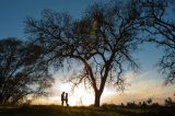 Newly engaged couple holds hands below a tree at sunset.